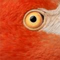 Красный фламинго - птица необыкновенной красоты, обитающая на Карибских островах