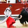 За что быки корриды не любят красные тряпки