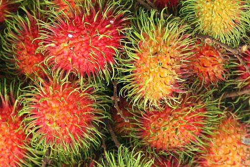 Полезные свойства экзотического красного волосатого фрукта-ёжика рамбутана