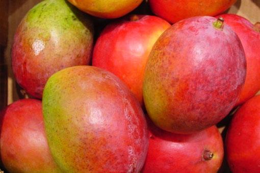 Лечебные и полезные свойства манго - индийского короля фруктов