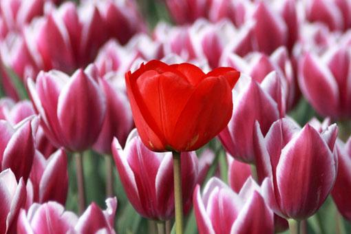 Любители красного цвета - успешные, сильные, уверенные и авантюрные личности