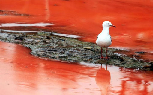 Вода на пляжах Австралии окрасилась в красный цвет