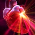 Ресвератрол предотвращает старение сердца