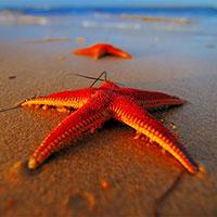 Две загадочные легенды происхождения названия красного моря