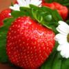 Ярко-красная ягода клубника — Её полезные, лечебные и магические свойства