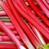 Лечебные и полезные свойства ревеня — красного желудочного корня, снимающего боль