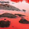 Вода на пляжах Австралии окрасилась в красный цвет, напугав отдыхающих