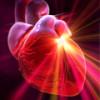 Ресвератрол в красном вине и фруктах предотвращает старение сердца
