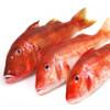Полезные и питательные свойства красного морского и пресноводного окуня