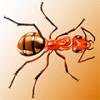 В царстве красных муравьёв — маленьких и эволюционно продвинутых