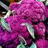 Красно-фиолетовая цветная капуста уменьшит риск сердечных заболеваний