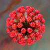 Краснуха (rubeola) — клиническая картина, лечение, профилактика