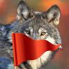 Почему волки боятся красные флажки — эффективный метод охоты