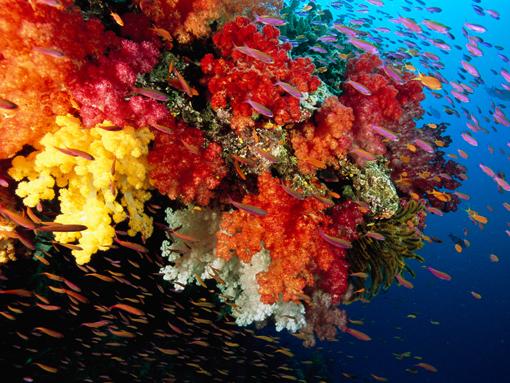Почему Красное море называется красным