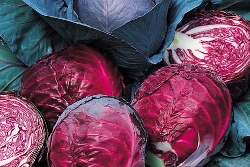 Полезные свойства капусты краснокочанной