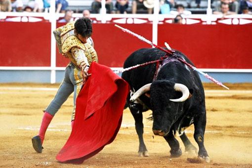 За что быки корриды не любят красную тряпку матадора (мулету)