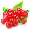 Красная смородина (поречка) - источник долголетия борющийся с раковыми клетками