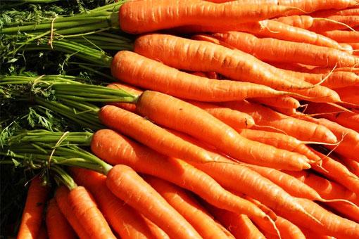 Лечебные, косметические, магические и полезные свойства моркови