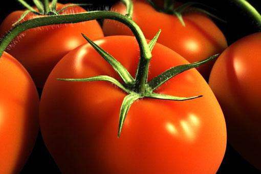 Диетические, питательные и полезные свойства помидора (томата)