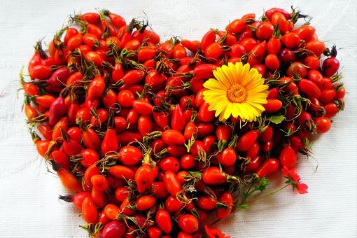 Полезные свойства кроваво-красного шиповника - универсального природного лекаря