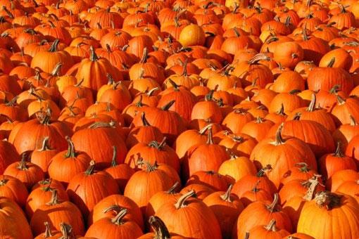 Лечебные и полезные свойства тыквы - главного атрибута Хэллоуина