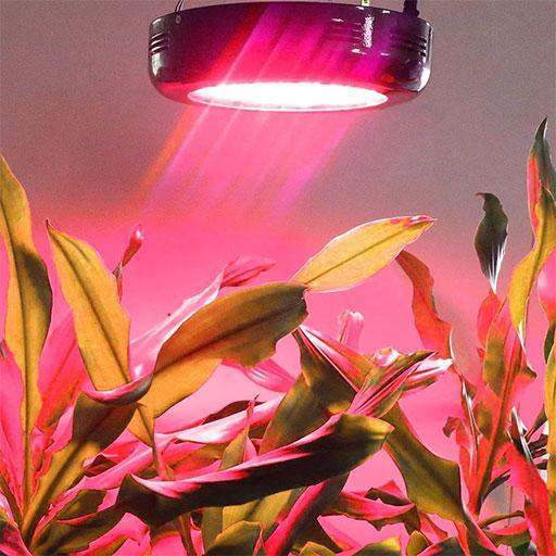 Влияние красного и инфракрасного света на цветение растений